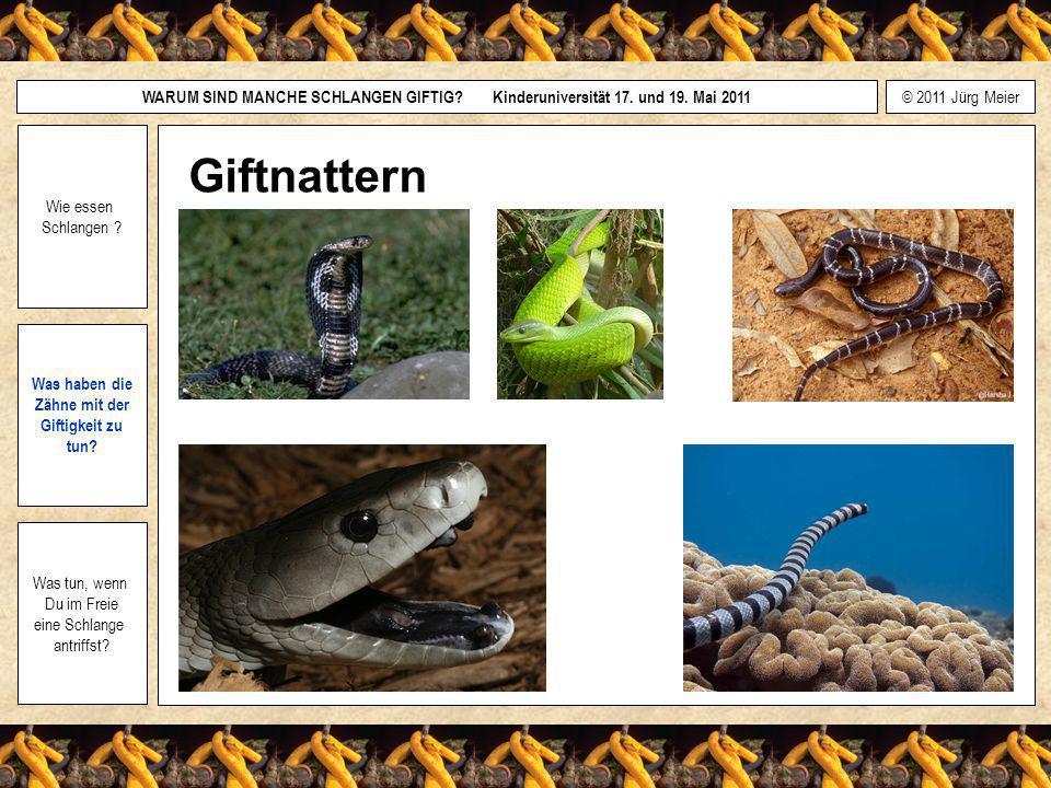 Giftnattern Wie essen Schlangen Was haben die Zähne mit der