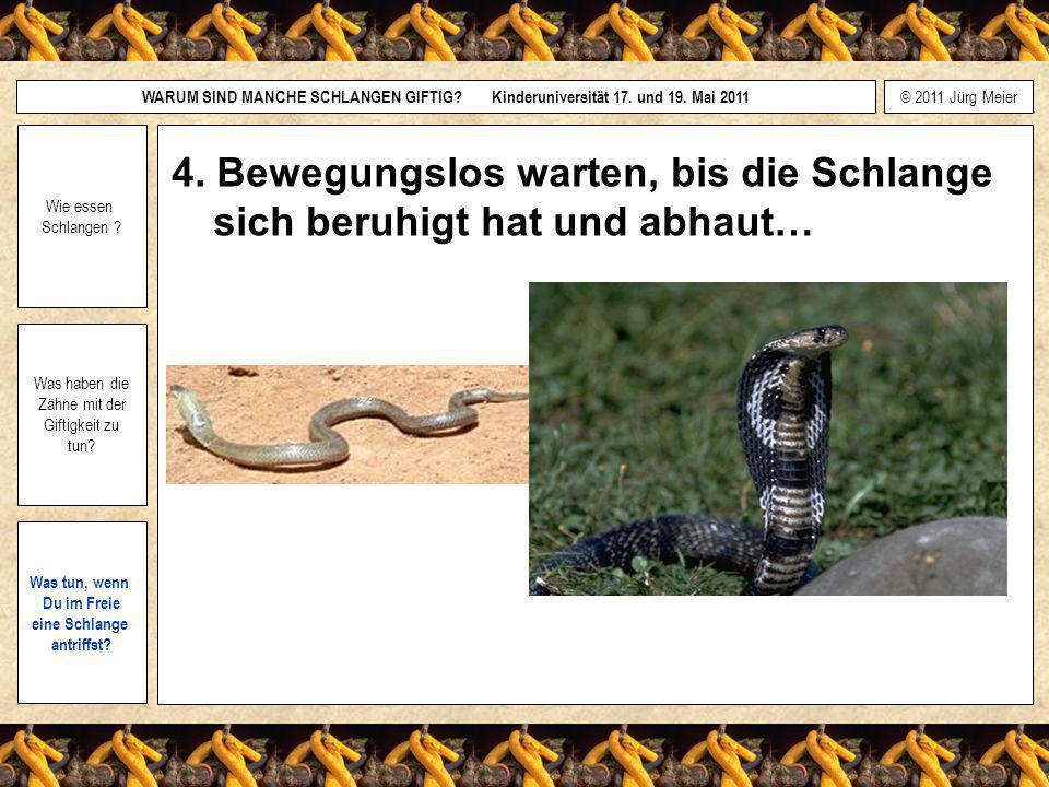 4. Bewegungslos warten, bis die Schlange sich beruhigt hat und abhaut…
