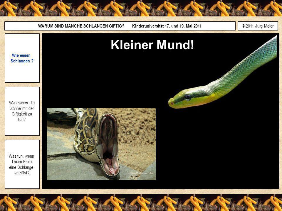 Kleiner Mund! Wie essen Schlangen Was haben die Zähne mit der
