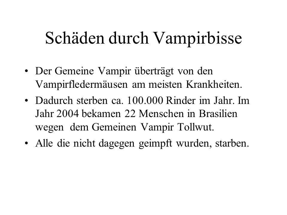 Schäden durch Vampirbisse