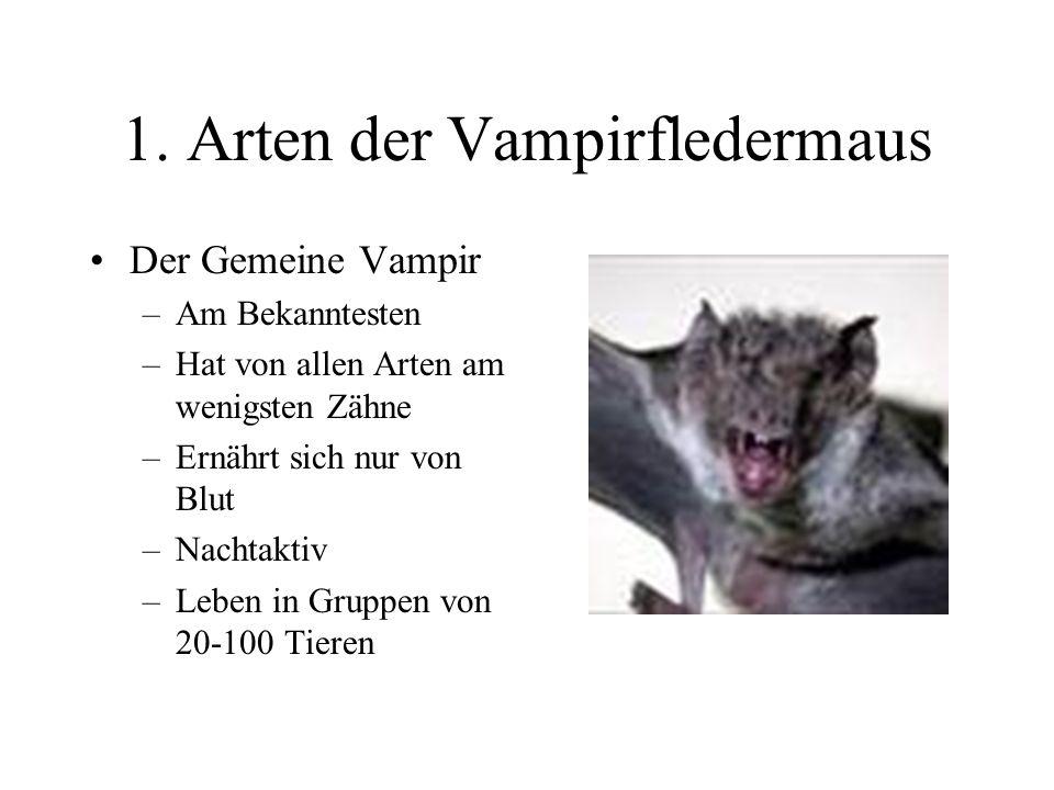 1. Arten der Vampirfledermaus