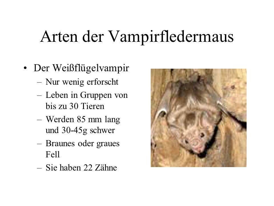 Arten der Vampirfledermaus