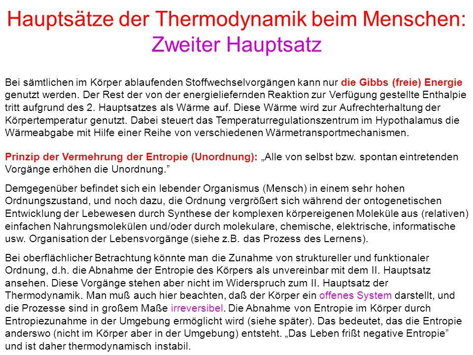 Hauptsätze der Thermodynamik beim Menschen: Zweiter Hauptsatz