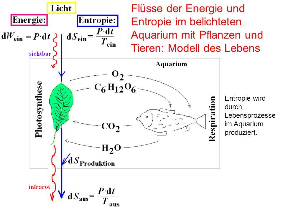 Flüsse der Energie und Entropie im belichteten Aquarium mit Pflanzen und Tieren: Modell des Lebens