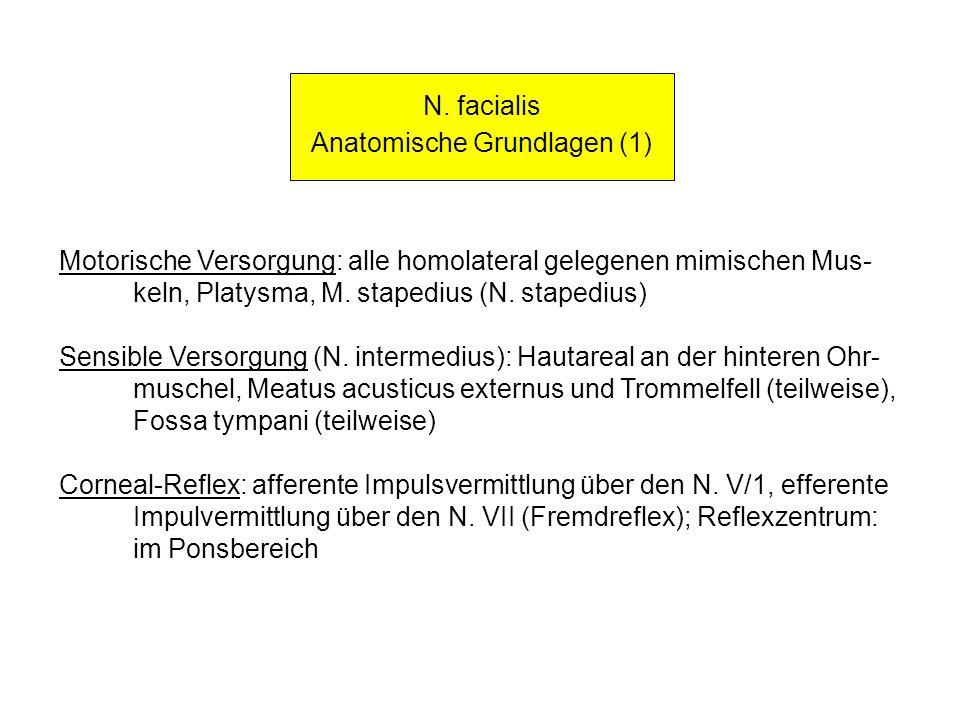 Anatomische Grundlagen (1)