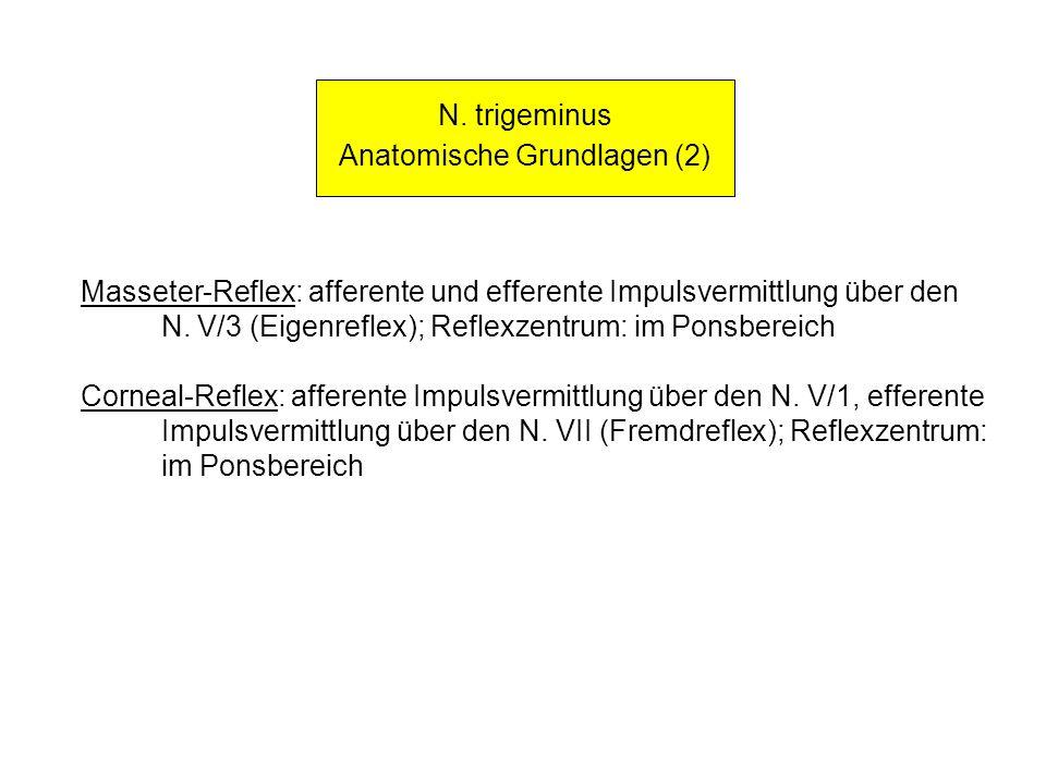 Anatomische Grundlagen (2)
