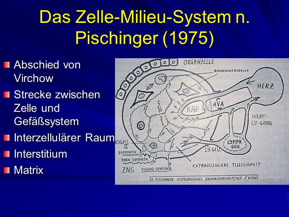 Das Zelle-Milieu-System n. Pischinger (1975)