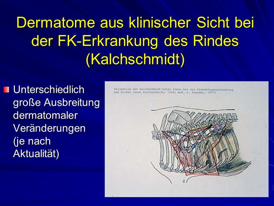 Dermatome aus klinischer Sicht bei der FK-Erkrankung des Rindes (Kalchschmidt)