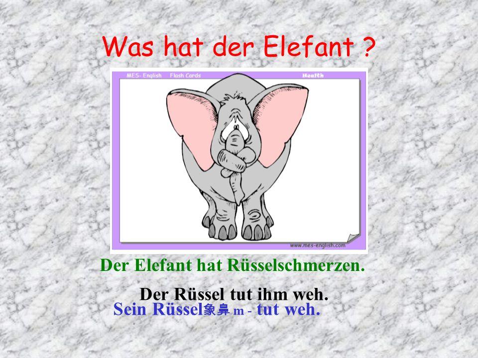 Was hat der Elefant Der Elefant hat Rüsselschmerzen.