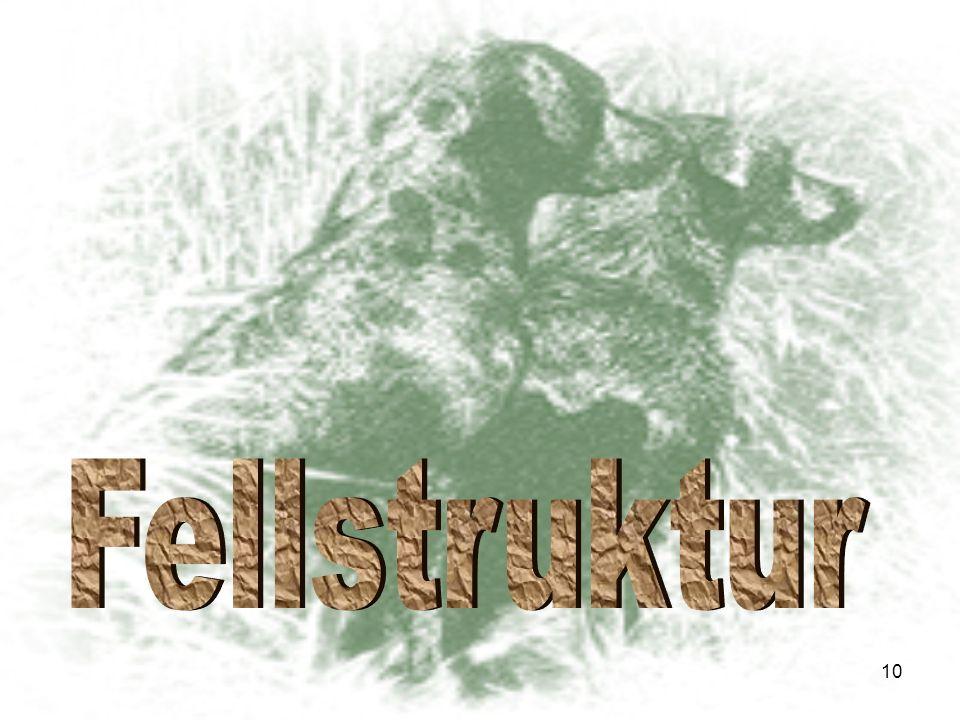 Fellstruktur
