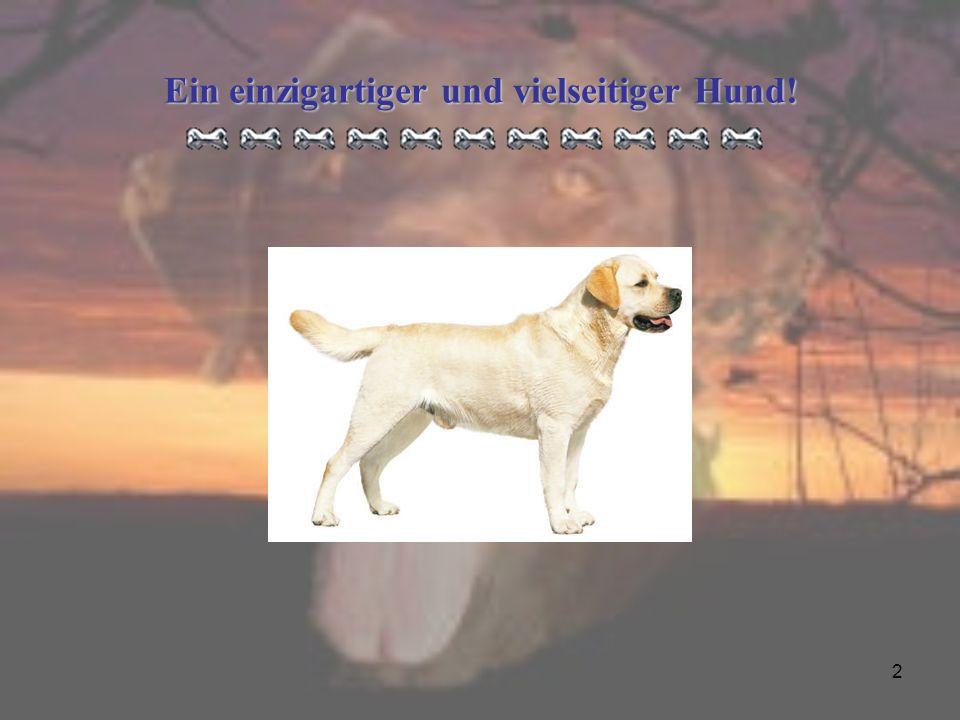 Ein einzigartiger und vielseitiger Hund!