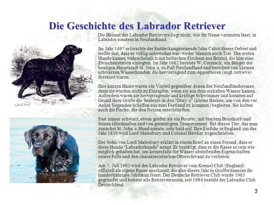 Die Geschichte des Labrador Retriever