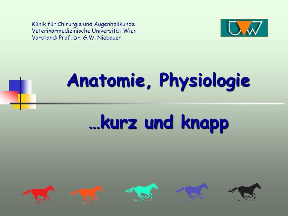 Anatomie, Physiologie …kurz und knapp