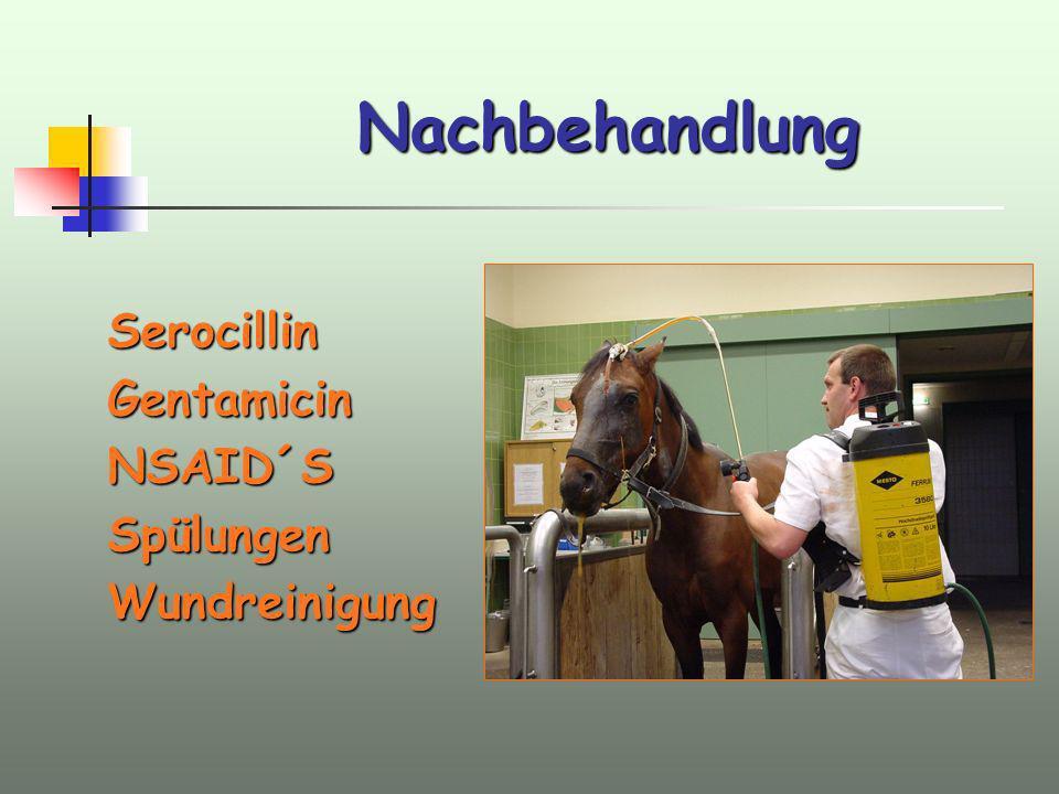 Nachbehandlung Serocillin Gentamicin NSAID´S Spülungen Wundreinigung