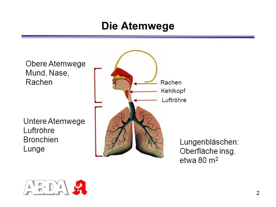 Die Atemwege Obere Atemwege Mund, Nase, Rachen