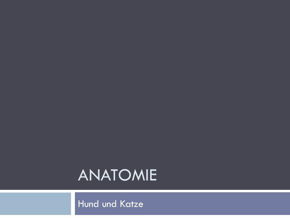 Anatomie Hund und Katze