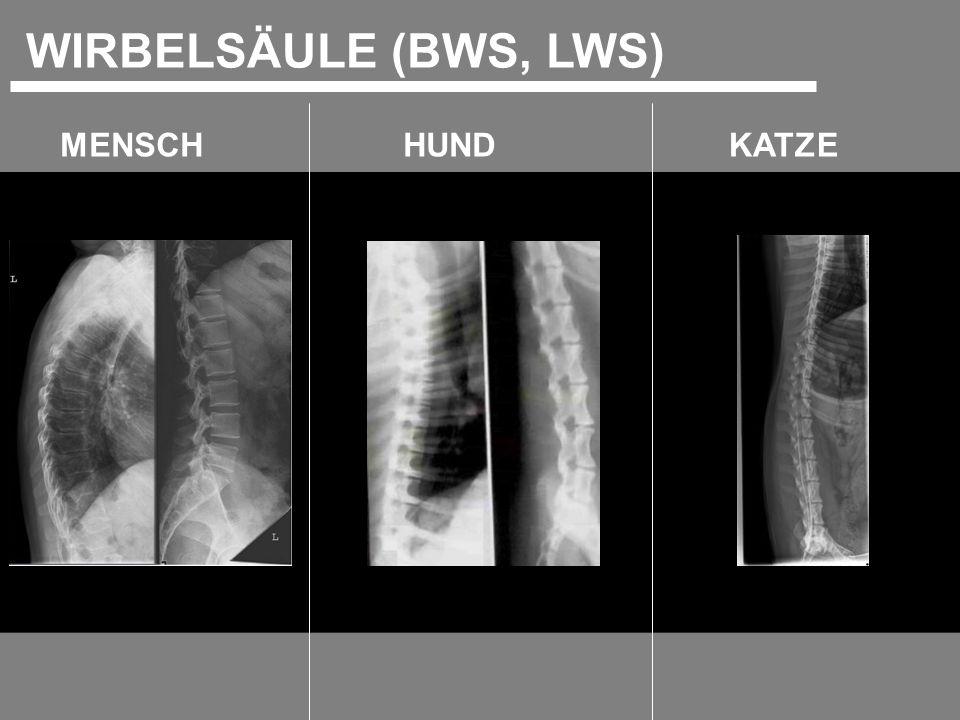 WIRBELSÄULE (BWS, LWS) MENSCH HUND KATZE