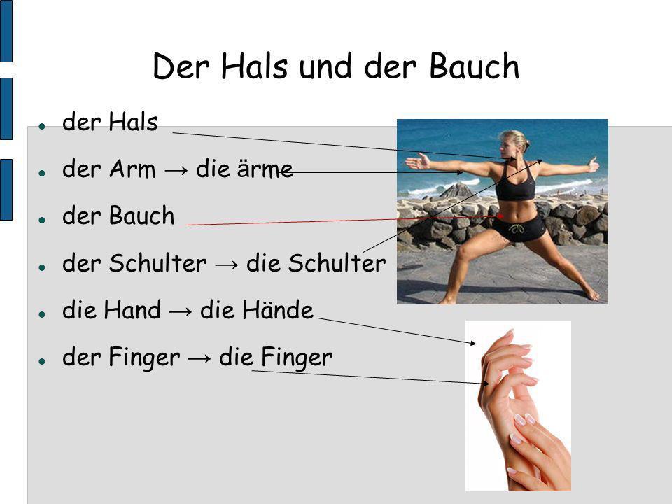 Der Hals und der Bauch der Hals der Arm → die ärme der Bauch