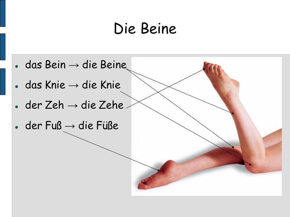 Die Beine das Bein → die Beine das Knie → die Knie der Zeh → die Zehe