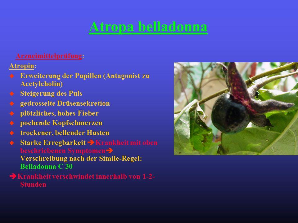 Atropa belladonna Atropin: