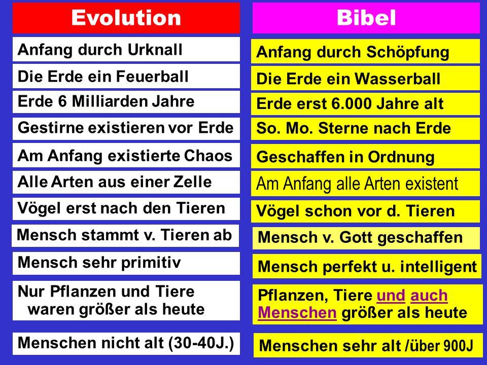 Evolution Bibel Am Anfang alle Arten existent Anfang durch Urknall