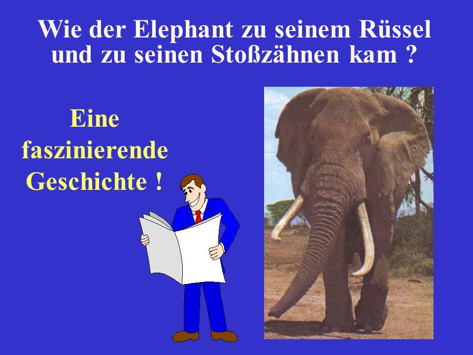 Wie der Elephant zu seinem Rüssel und zu seinen Stoßzähnen kam