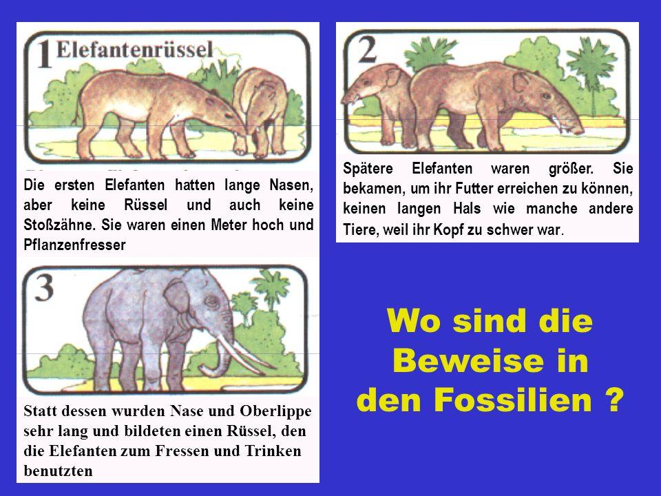 Wo sind die Beweise in den Fossilien