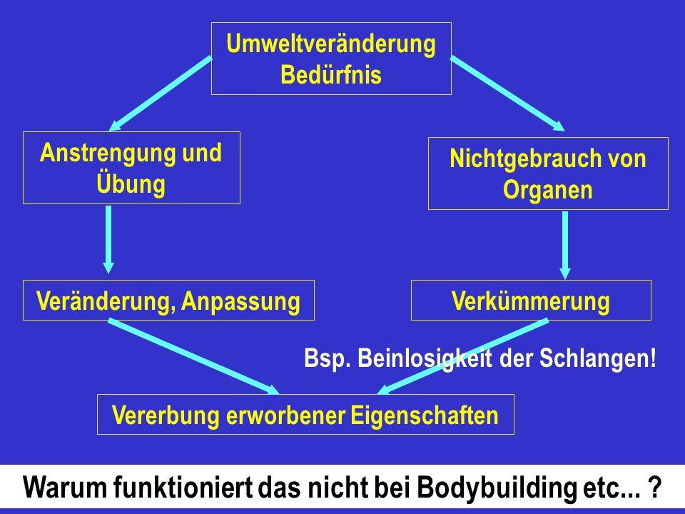 Warum funktioniert das nicht bei Bodybuilding etc...