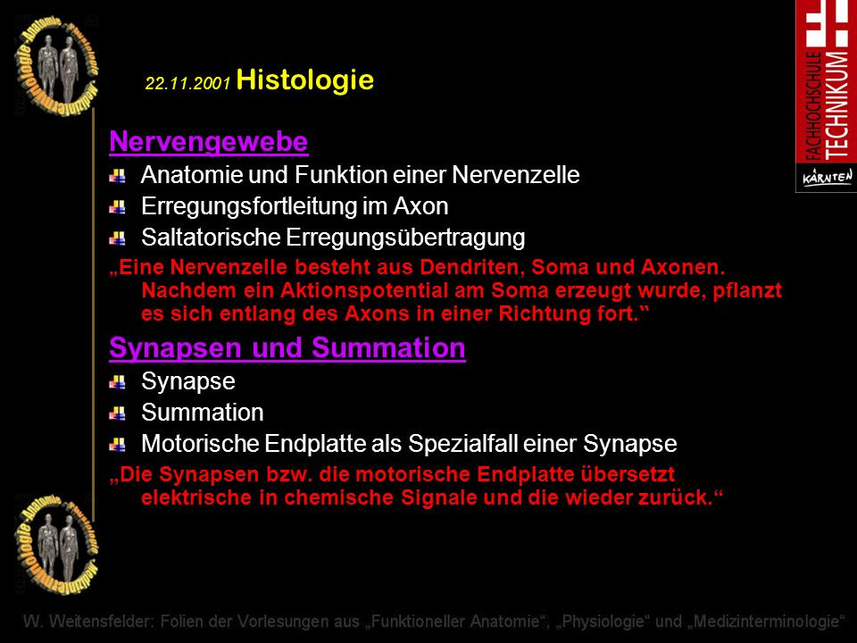 Synapsen und Summation