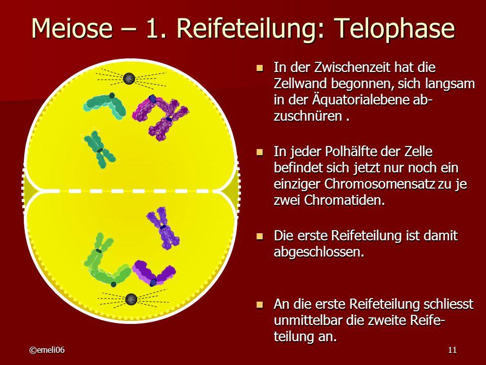 Meiose – 1. Reifeteilung: Telophase