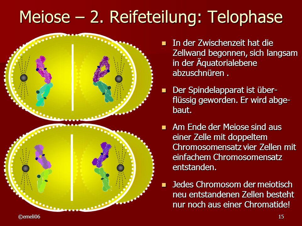 Meiose – 2. Reifeteilung: Telophase