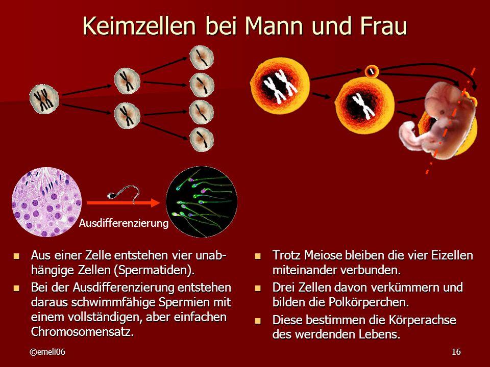 Keimzellen bei Mann und Frau