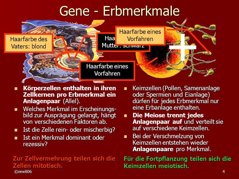 + Gene - Erbmerkmale Haarfarbe eines Vorfahren