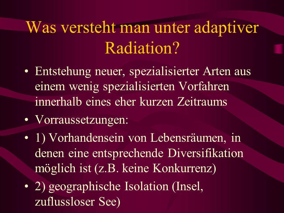 Was versteht man unter adaptiver Radiation