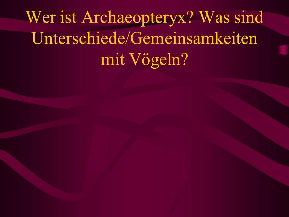 Wer ist Archaeopteryx Was sind Unterschiede/Gemeinsamkeiten mit Vögeln