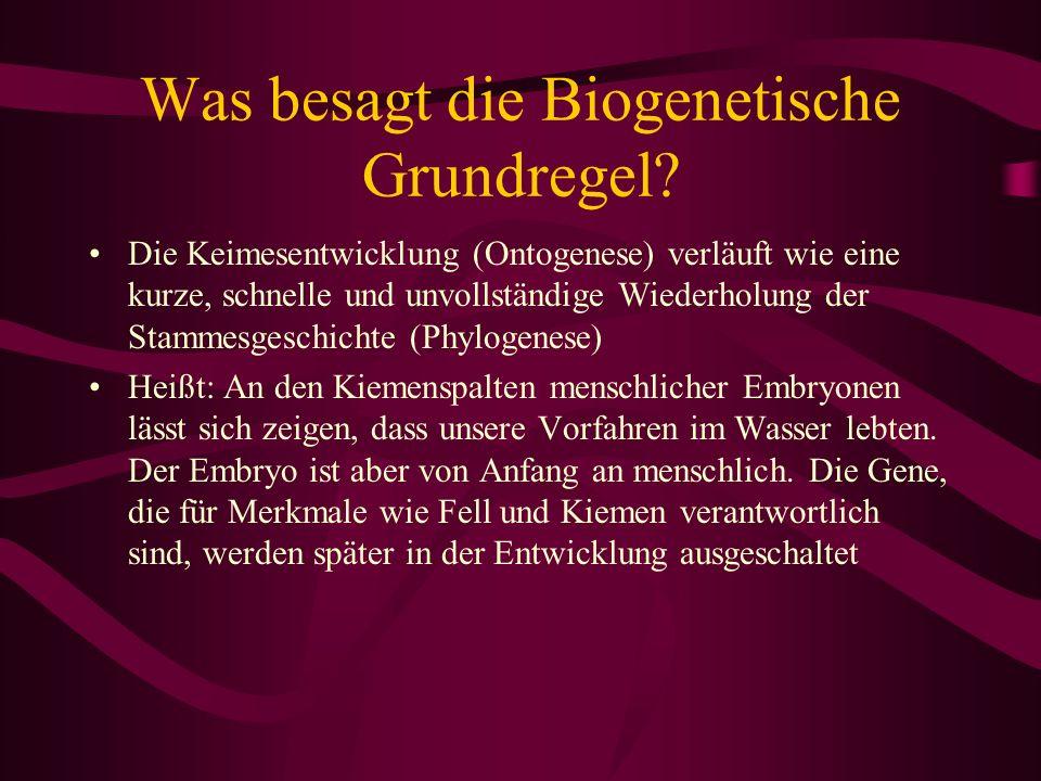 Was besagt die Biogenetische Grundregel