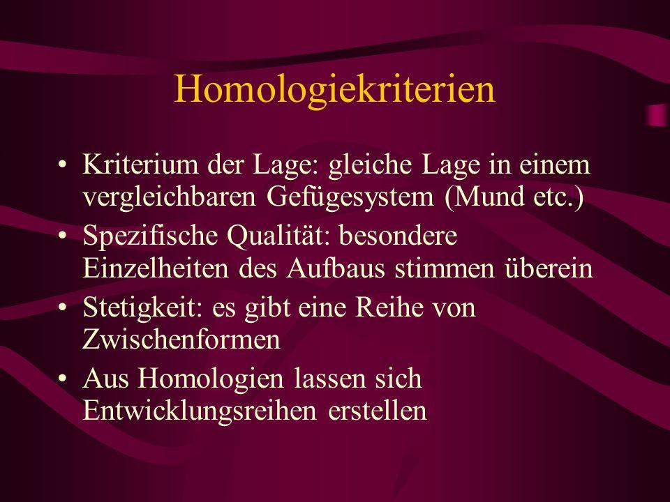 Homologiekriterien Kriterium der Lage: gleiche Lage in einem vergleichbaren Gefügesystem (Mund etc.)