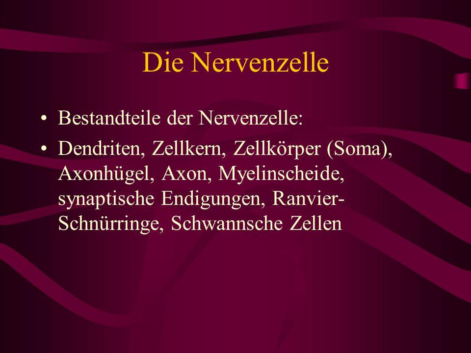 Die Nervenzelle Bestandteile der Nervenzelle: