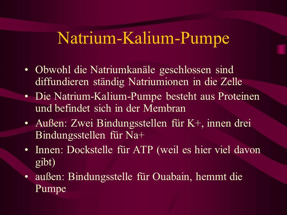 Natrium-Kalium-Pumpe
