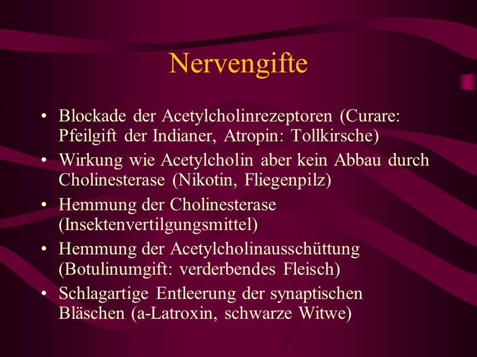 Nervengifte Blockade der Acetylcholinrezeptoren (Curare: Pfeilgift der Indianer, Atropin: Tollkirsche)