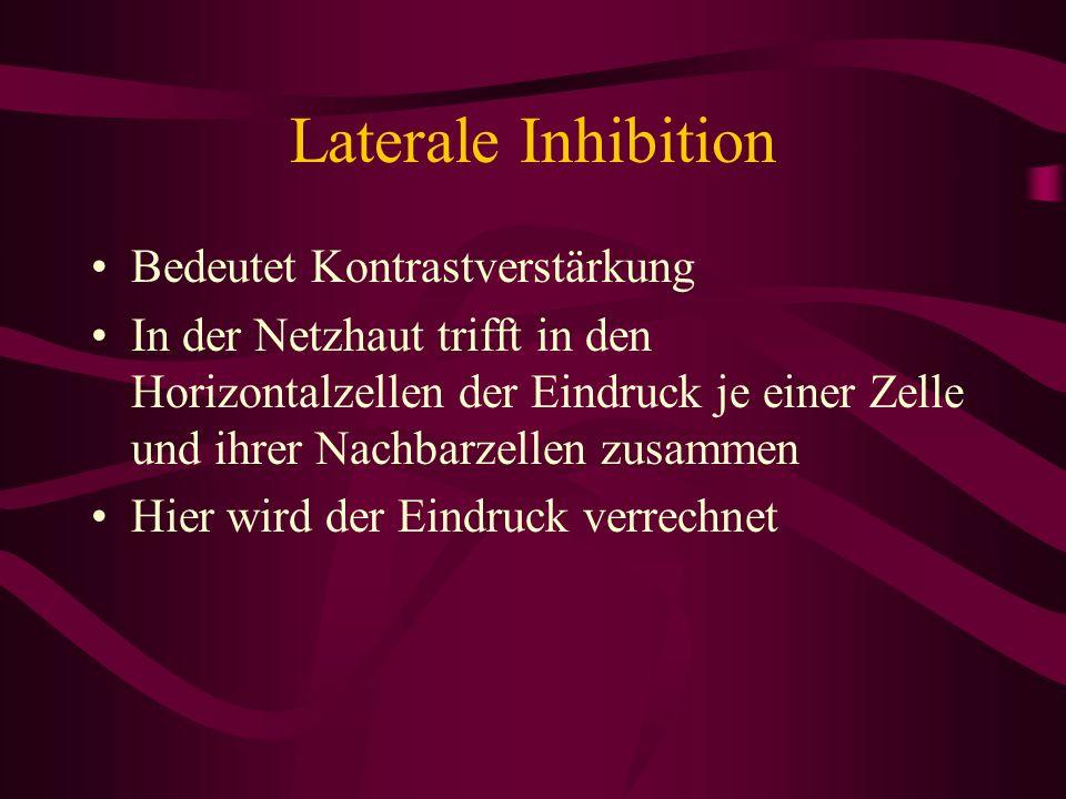 Laterale Inhibition Bedeutet Kontrastverstärkung