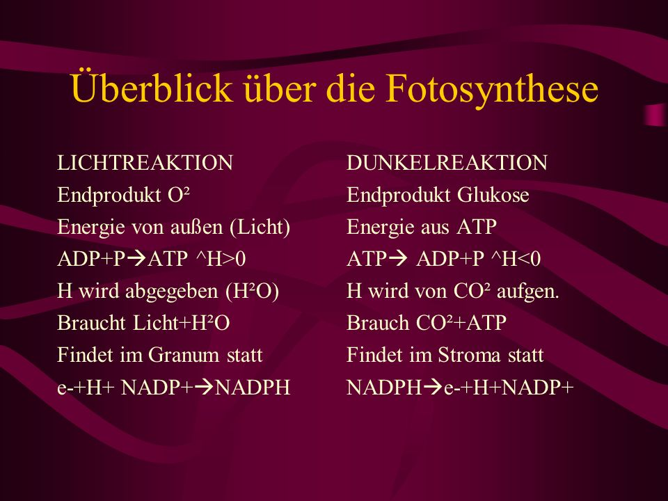 Überblick über die Fotosynthese