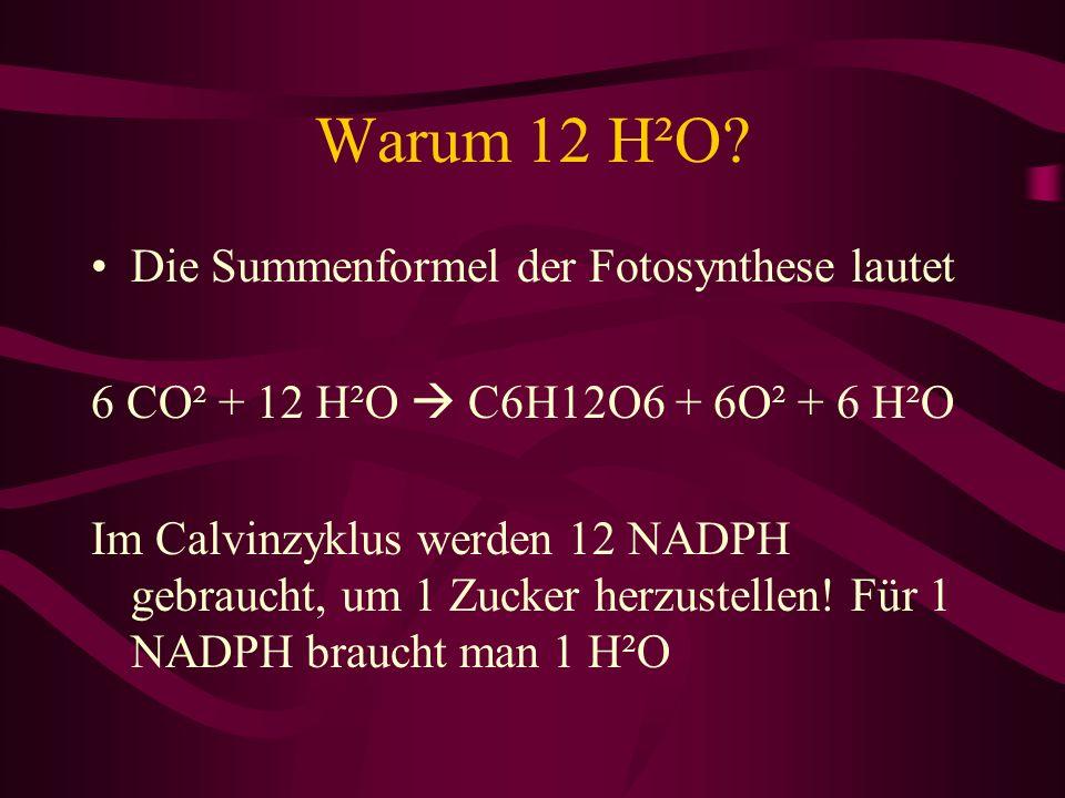 Warum 12 H²O Die Summenformel der Fotosynthese lautet