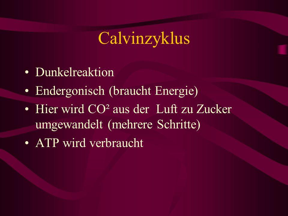 Calvinzyklus Dunkelreaktion Endergonisch (braucht Energie)