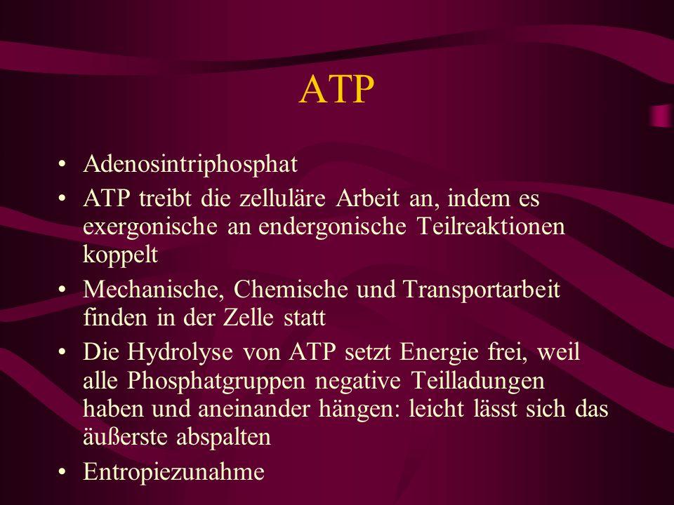ATP Adenosintriphosphat