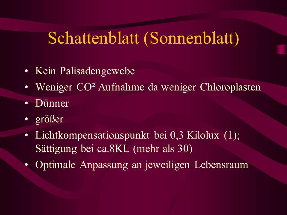 Schattenblatt (Sonnenblatt)
