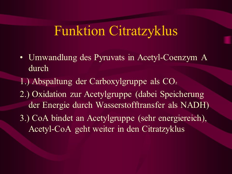 Funktion Citratzyklus