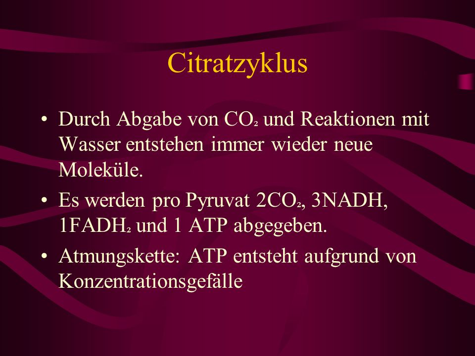 Citratzyklus Durch Abgabe von CO² und Reaktionen mit Wasser entstehen immer wieder neue Moleküle.