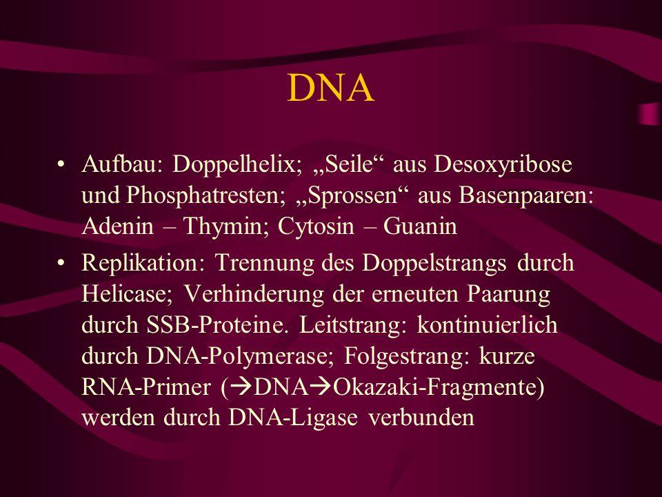 """DNA Aufbau: Doppelhelix; """"Seile aus Desoxyribose und Phosphatresten; """"Sprossen aus Basenpaaren: Adenin – Thymin; Cytosin – Guanin."""