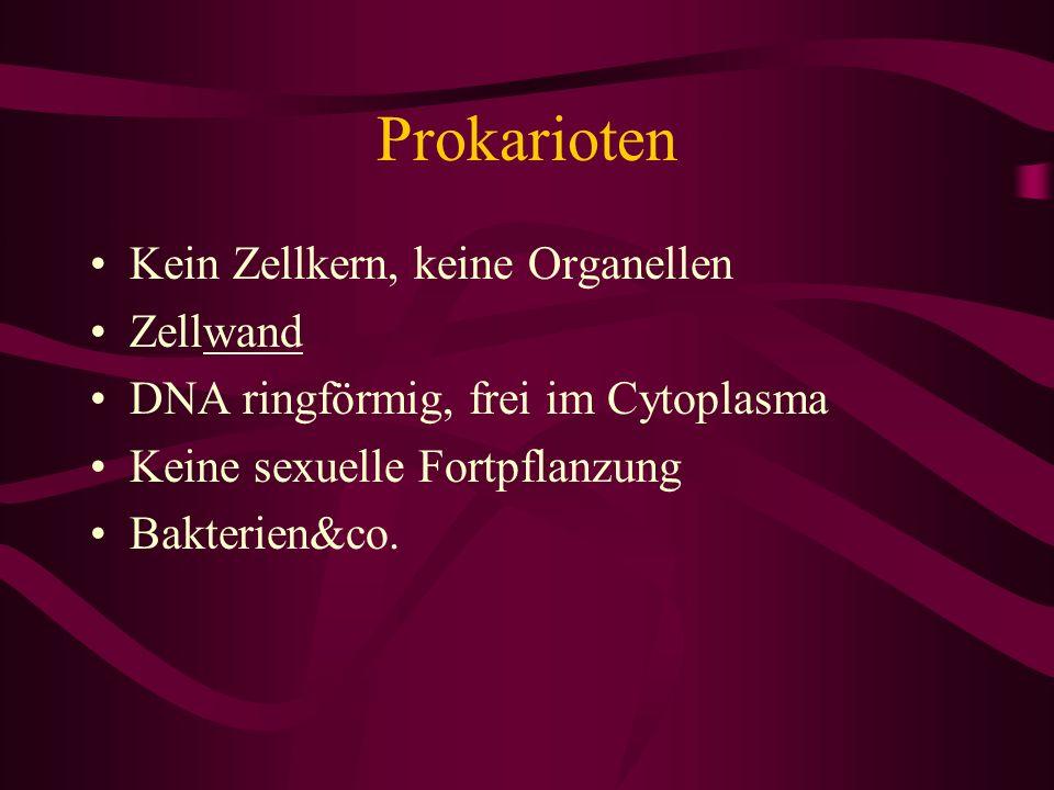 Prokarioten Kein Zellkern, keine Organellen Zellwand